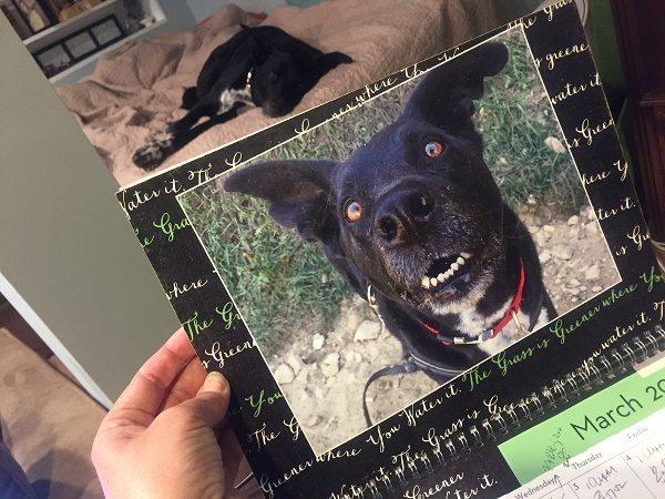 2017_dog_calendar_10