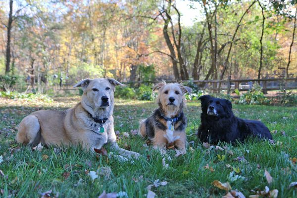 My three dogs: Jasper, Tucker and Lilah (Photo by Susan C. Willett)
