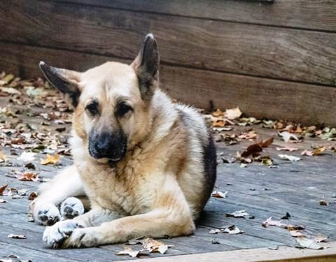 Old Friends Senior Dog Sanctuary Layla enjoys this time of the year.