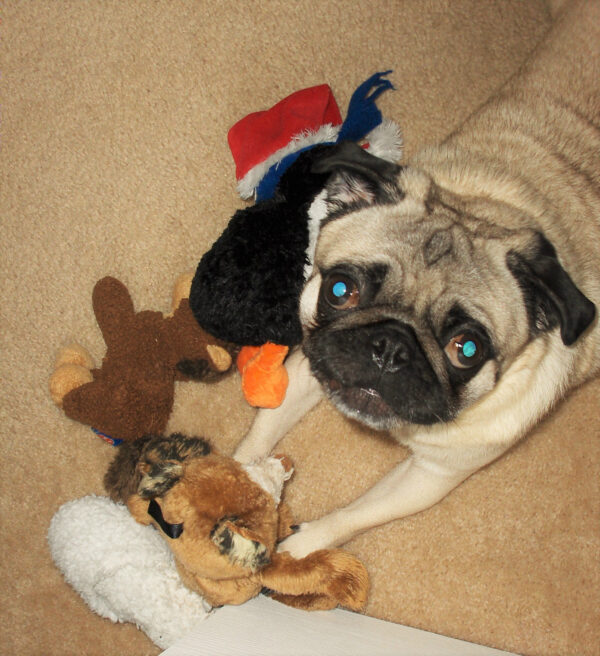 The only thing that rivaled his love for people, was his love for toys! (Photo courtesy of Eden Strong)