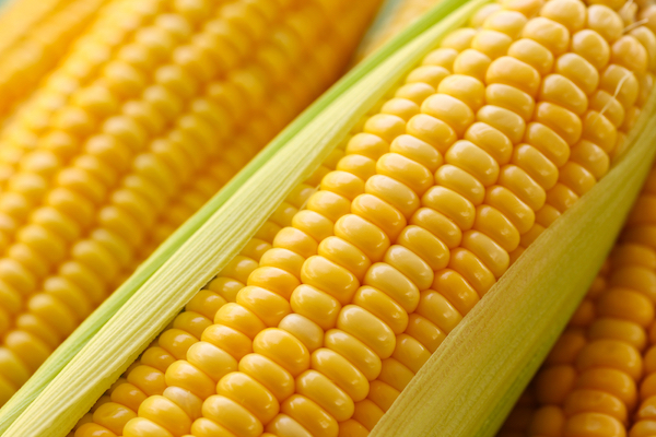 Corn by Shutterstock.