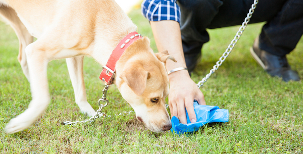 Dog sniffing poop by Shutterstock.