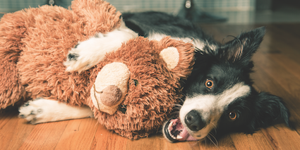 What Is Your Dog S Relationship With Stuffed Animals