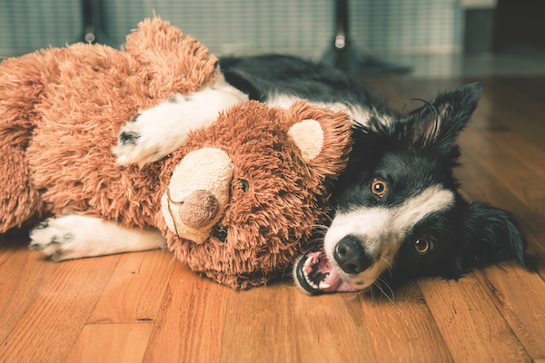 What Is Your Dog's Relationship With Stuffed Animals?