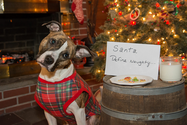 How To Keep Your Home Safe For Dogs During The Holidays