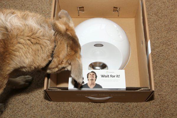 Jasper looking in Clever Pet Hub box.