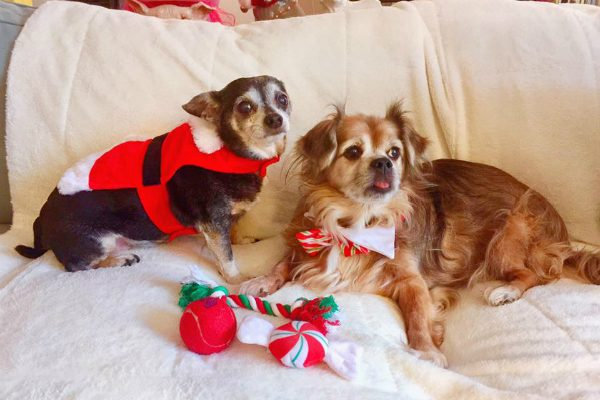After weeks by themselves, Bitsy Marie and Bear got to enjoy Christmas with their new family. (Photo courtesy @petlastwishes on Facebook)