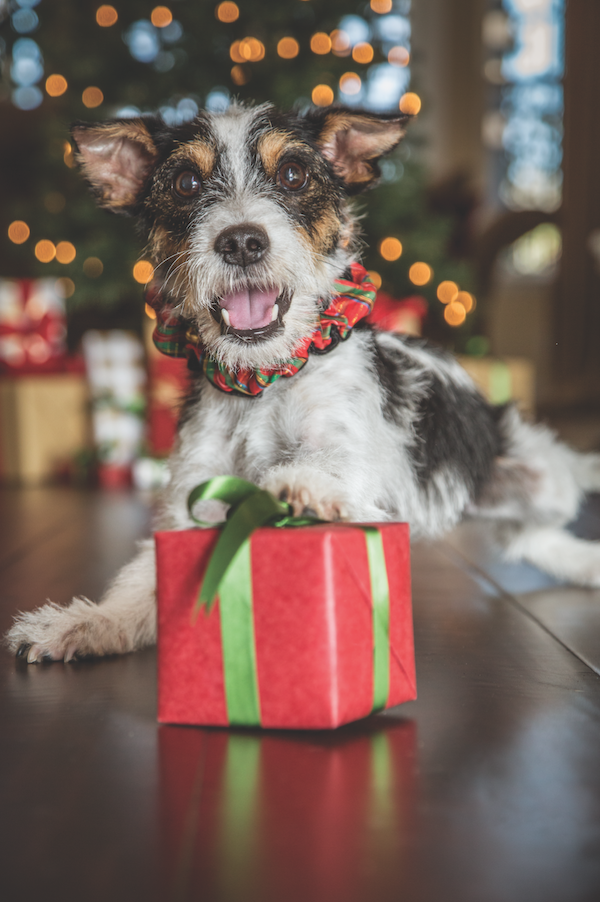 Holiday pup by Gina Cioli/Lumina Media.