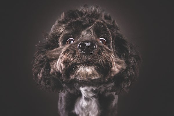 Dog photo by Christian Vieler.