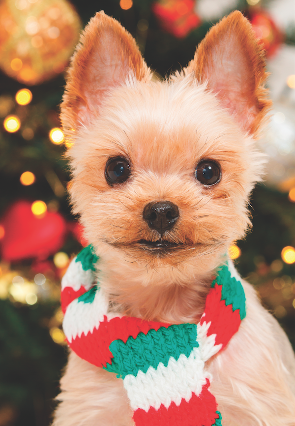 Dog in front of Christmas tree by Shutterstock.