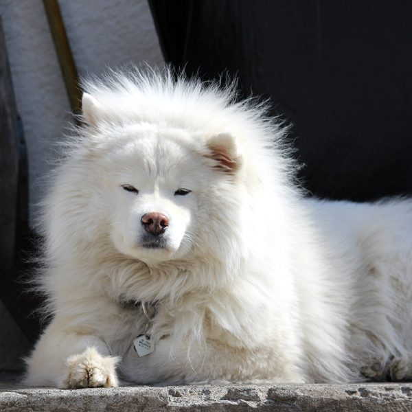 oldest dog breed