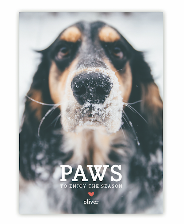 paws holiday cards by guess what design studio starting at 163 for 100 unleash the joy holiday cards by sandra picco design starting at 163 for 100 - Dog Holiday Cards