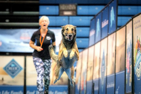 Rex and Lianne at the 2016 DogDogs World Championship. (Photo by Kim Nygard, courtesy DockDogs)