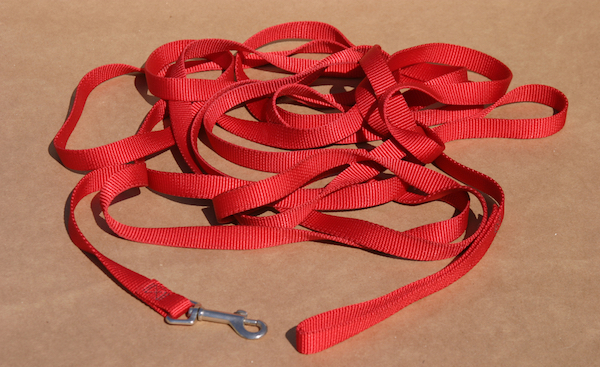 Long line leash by Shutterstock.