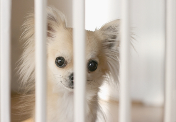 Dog behind gate by Shutterstock.