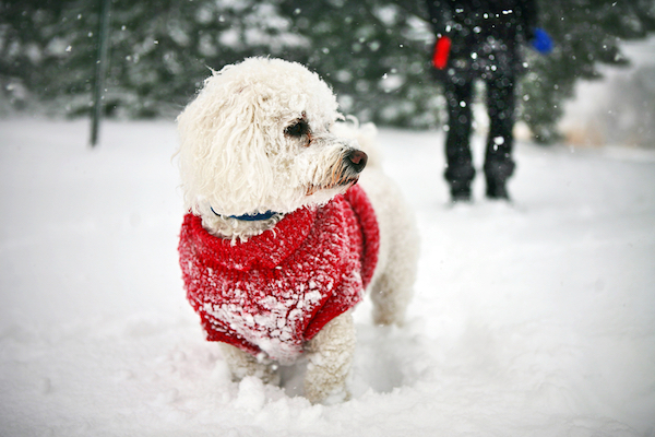 Do Dogs Need Coats in the Winter? 7 Myths and Facts