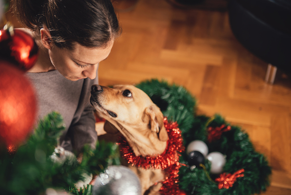 Woman, dog and Christmas tree.