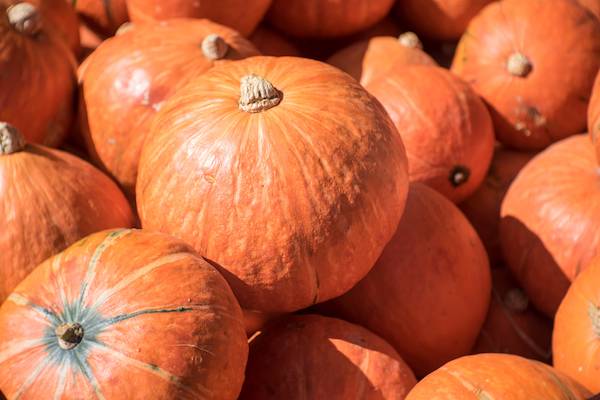Pumpkins by Shutterstock.
