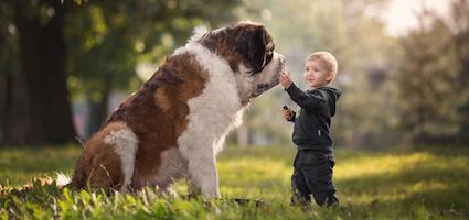 Saint Bernard Little Kids Big Dogs Andy Seliversoff