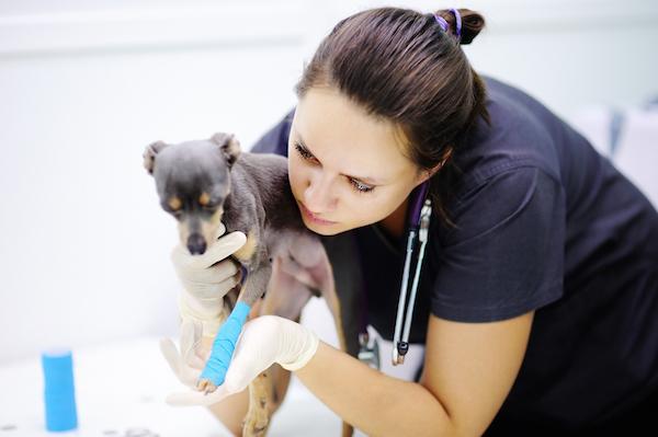 Vet exams dog with broken leg by Shutterstock.