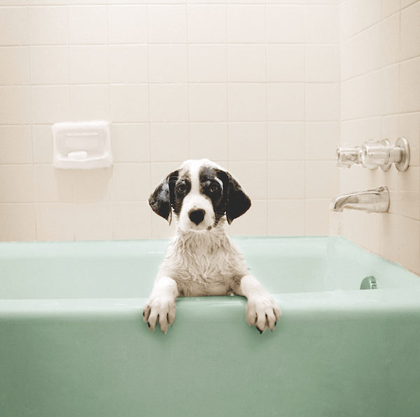 Dog in bathtub by iStock.