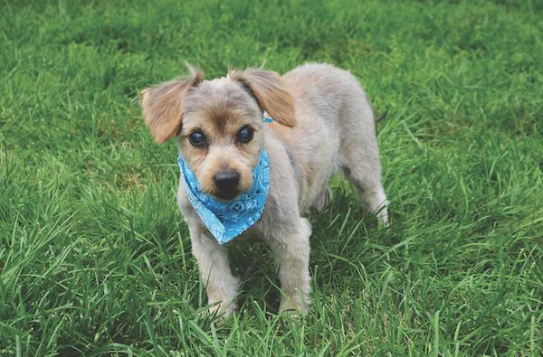 Fuzzy. (Photo courtesy Rolling Dog Farm)