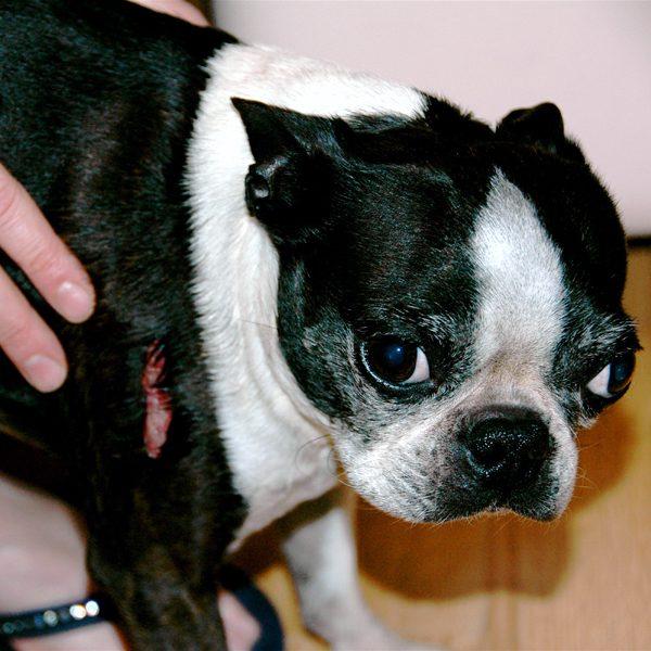 neosporin for dogs