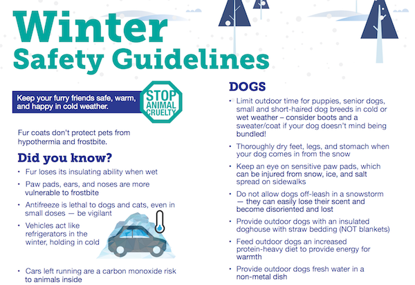 "See if your local humane society offers a winter guidelines pamphlet, like <a href=""https://www.edmontonhumanesociety.com/sites/default/files/pdf-uploads/cold_weather_guidelines_web.pdf"">this one from the Edmonton Humane Society</a>."