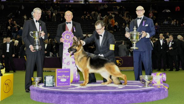 Westminster Dog Show Past Winners