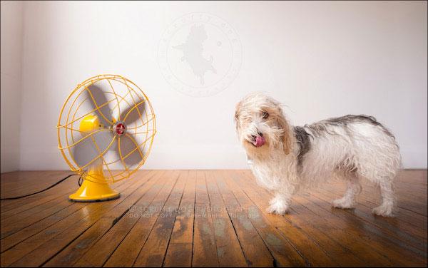 Merrick vs. the fan. (Photo by Illona of Scruffy Dog Photography)