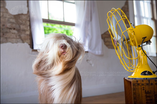 The Blow photography project. (Photo by Illona of Scruffy Dog Photography)