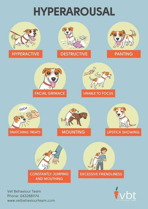 Signs of hyperarousal, which leads to a dog being a bully. (Image courtesy Patricia Tirrell of the Vet Behavior Team)