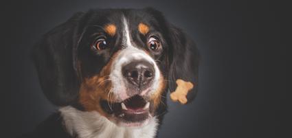 Functional dog treats