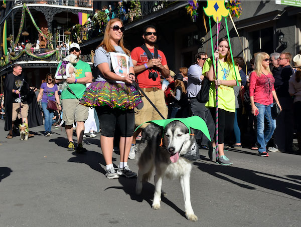 Husky enjoying Mardi Gras by Shutterstock.