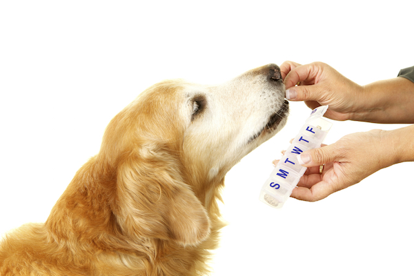 Dog taking pill by Shutterstock.