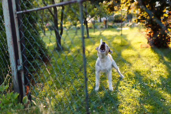 This dog may not want you in his yard, but that doesn't mean he is aggressive. (Photo by Shutterstock)