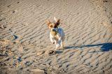 Dog running on a beach by Shutterstock.