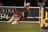 Stripe by Sandra Dukes/Westminster Kennel Club.