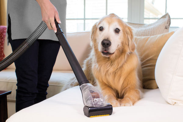 Dogs And Cleaning Dogster