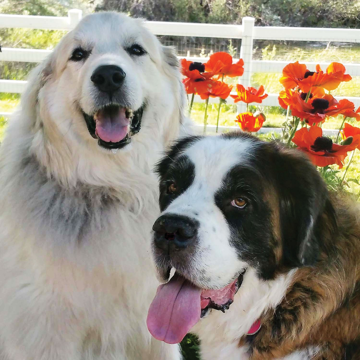 enough winter already these 10 dogs are celebrating spring tizzy and goober from reader michael parness