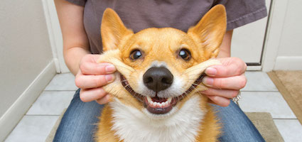 What Kind Of Food Can Take Care Dog S Teeth