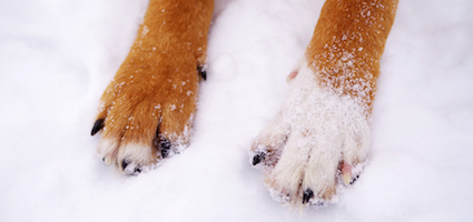 4 Natural Ways to Protect Your Dog's Paws Year-Round