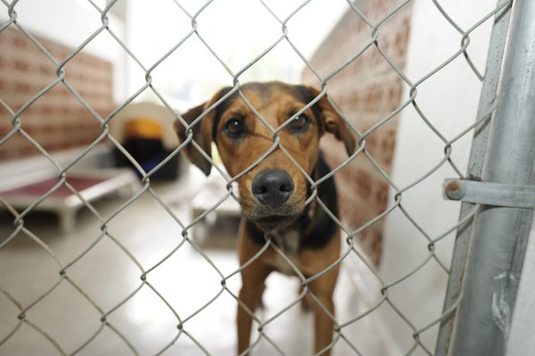 A dog in a shelter.