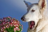 Dog with flowers by Shutterstock.