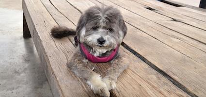 Senior dog by Shutterstock.
