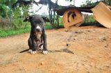 ASPCA raid of dog fighting ring. (Photo courtesy of ASPCA)