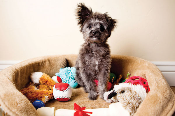 Dog with toys by iStock.