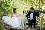 Even if your dog can't be in your wedding, they can be in your pictures. (Photo by Shutterstock)