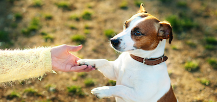 Dog shaking paw by Shutterstock.