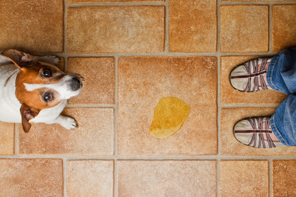 The Best Flooring for Dogs — and How to Protect Your Floors